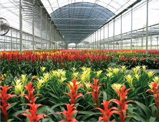 polycarbonate-greenhouse suppliers in Coimbatore